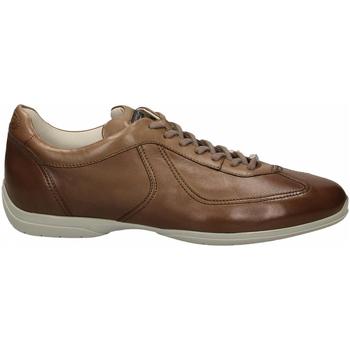 Topánky Muži Derbie Santoni PEDULA 7F+INF. GOOSE PLUS e50-marrone-medio