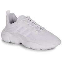 Topánky Muži Nízke tenisky adidas Originals HAIWEE Biela