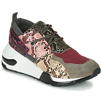 Topánky Ženy Nízke tenisky Steve Madden CLIFF Viacfarebná