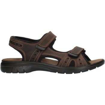 Topánky Muži Športové sandále Imac 503370 Brown