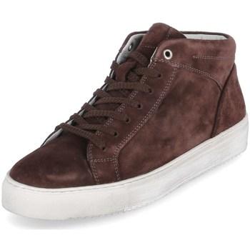 Topánky Muži Členkové tenisky Sioux 38192 Hnedá