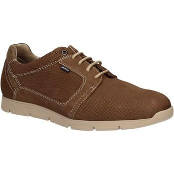 Topánky Muži Derbie Baerchi 5080 Hnedá