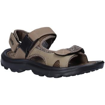 Topánky Muži Sandále Lotto T4769 Hnedá