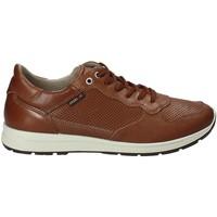 Topánky Muži Nízke tenisky Enval 1211422 Hnedá