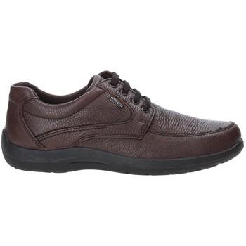 Topánky Muži Nízke tenisky Enval 4233511 Hnedá