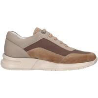 Topánky Muži Nízke tenisky CallagHan 91311 Béžová
