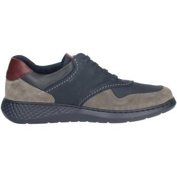 Topánky Muži Nízke tenisky Notton 158 Blue