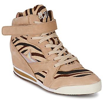 Topánky Ženy Členkové tenisky Ash JAZZ Zebra
