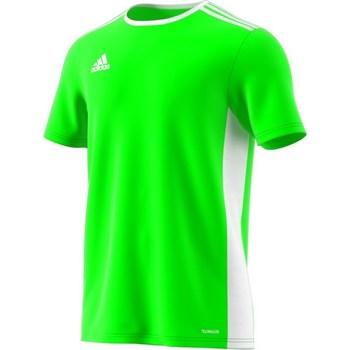 Oblečenie Muži Tričká s krátkym rukávom adidas Originals Entrada 18 Zelená